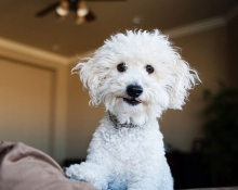 流浪在外的泰迪犬,我该如何接近它?