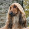 成一只万人瞩目的萌犬,梳理犬毛不可少!