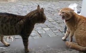 路过的橘猫劝架还被凶,关键时刻,扫地僧出现,成阻止了一场武林浩劫