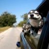 带你去吹吹风~各类狗狗车窗外表情