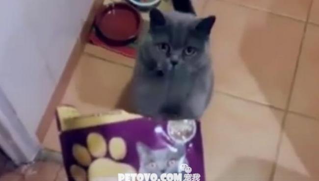 遇到这样的猫请不要骂它,直接打就行,跟要饭的似的