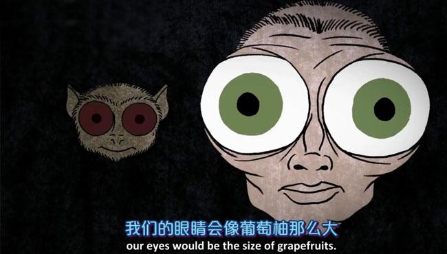 蟾蜍感光速度比人类慢25倍 猫、猴子在夜晚如何看东西的