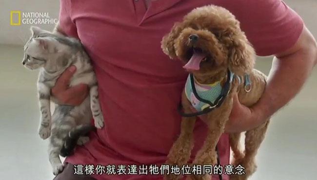 一分钟解决 泰迪犬争宠的问题:狗为啥不能容忍主人抱另一只狗?