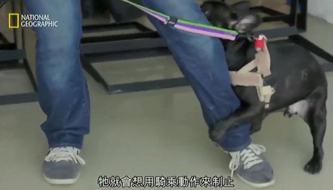 三步制止不雅动作:狗看到谁都要骑一骑,这是要干嘛?