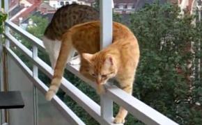 橘猫9楼栏杆走猫步,好在关键时刻我赶紧按了暂停键,不然它们就掉下去了,机智如我