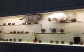 这不是马爷的博物馆吧!这是要破产的节奏,看着心惊肉跳