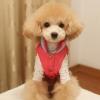 泰迪犬、英系博美的性格分析