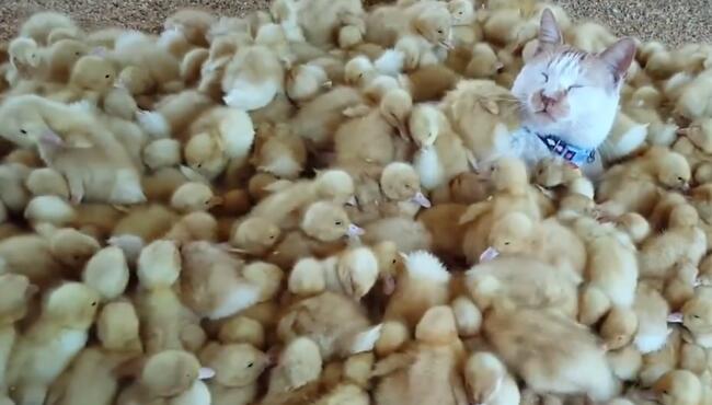 这货达到猫生巅峰了,一晚上叫了这么多鸭!