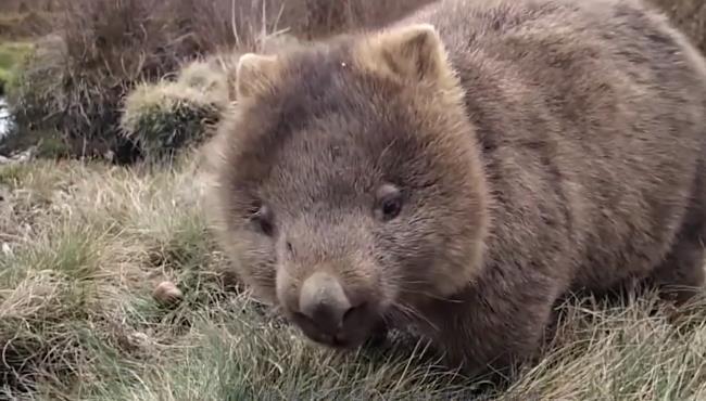 袋熊:你要看我拉的粑粑么?方块的,老神奇了。又是个吃素的胖子 360截图20170911212332581.jpg