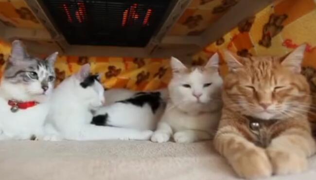 大橘为重,稳如泰山,动了动了,橘猫终于动了! 2.jpg