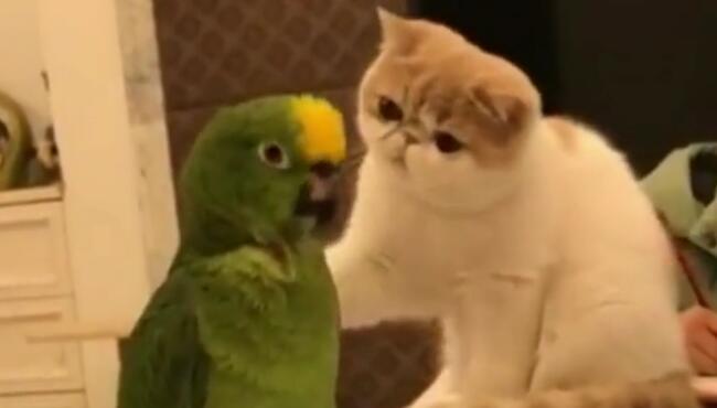 听话,不然我让你生个猫头鹰 加菲猫