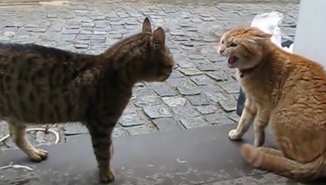 路过的橘猫劝架还被凶,关键时刻,扫地僧出现,成阻止了一场武林浩劫 橘猫