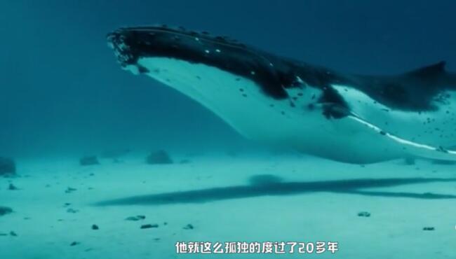 Alice鲸鱼,它的尸体可以供养整套生命系统长达百年,这是它留给大海最后的温柔 17112801.jpg