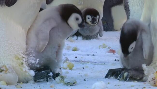 企鹅爸爸:敢欺负我家宝贝,看腻敢欺负我宝宝,啄死你! QQ截图20180102154918.jpg