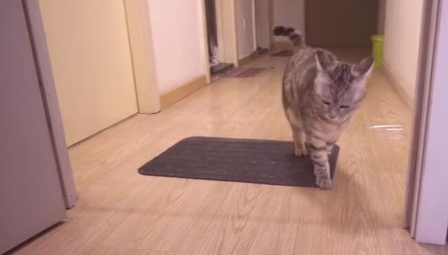 难怪监控叫猫眼不叫狗眼,放只二哈试试,愣劲一上来把自己能黏住 喵星人,胶带,橘猫