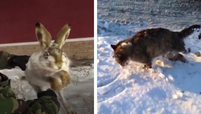 零下六十度,兔子一跳就冻住了,狗狗走着走着就冻住了 狗狗,兔子,冻死