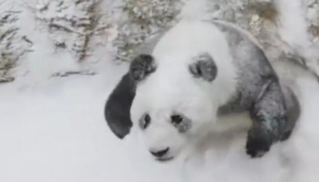 熊猫牌糯米糍冰淇淋,一场大雪治好了多年的黑眼圈 熊猫,大雪
