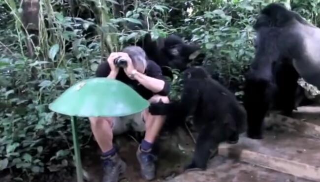 小黑:妈,他不跟我确认眼神。大猩猩不让,不让小猩猩跟大傻子玩 大猩猩,小猩猩,眼神