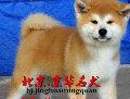 发帖人 - 京华名犬