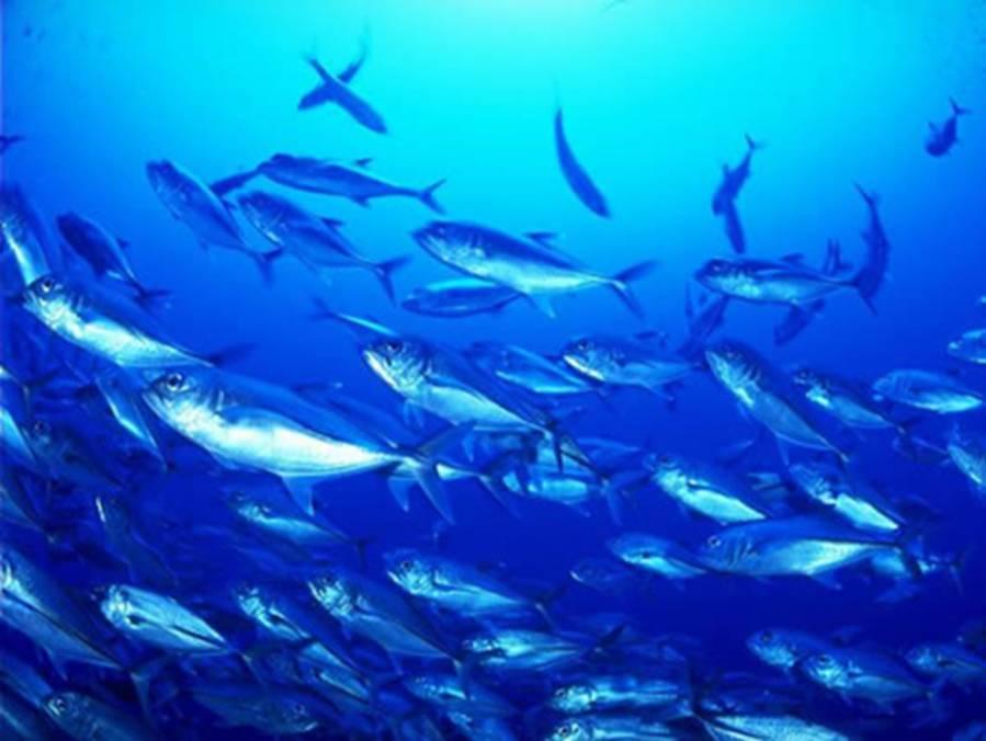 唯美的海底世界